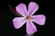flower-171644_960_720