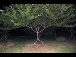 treeisatree