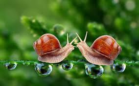 images snail